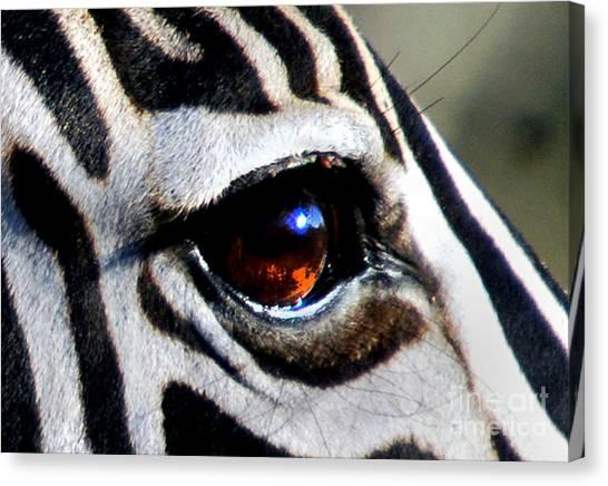 Sunset Reflected In Zebra's Eye    Canvas Print