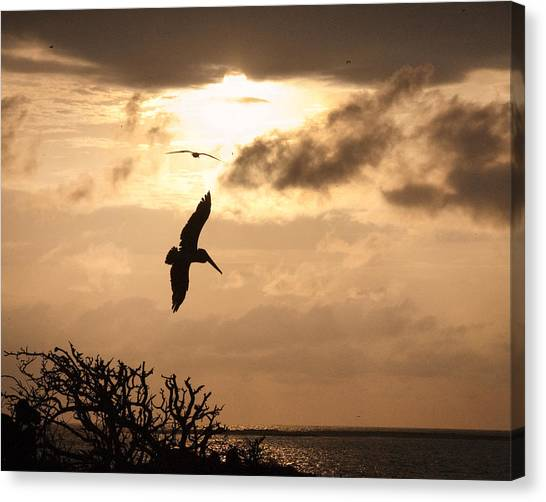 Sunset Soaring Canvas Print