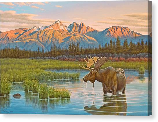 Moose Canvas Print - Sunset Solitude     by Paul Krapf