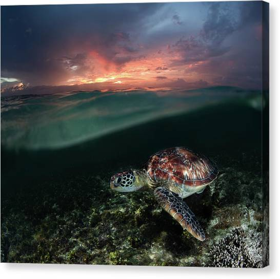 Sunset Swim Canvas Print by Andrey Narchuk