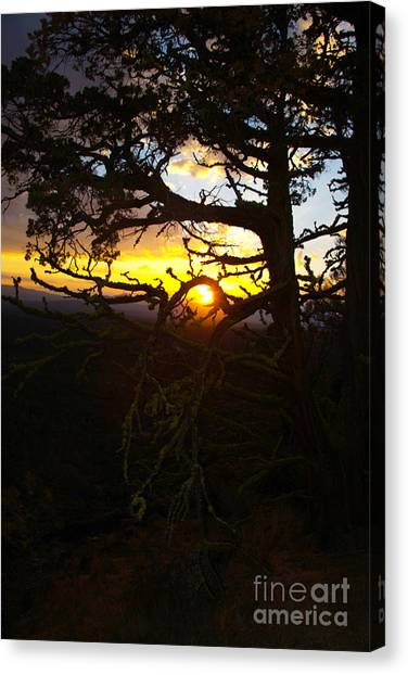 Sunset Through Branch Canvas Print