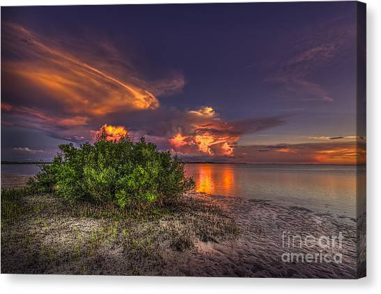 Mangrove Trees Canvas Print - Sunset Thunder Storms by Marvin Spates