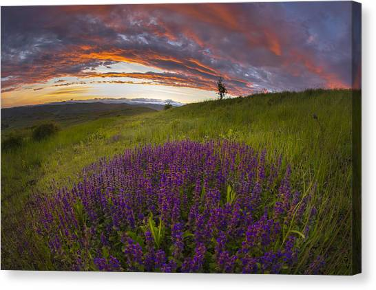 Sunset With Lavender Canvas Print by Ovidiu Caragea