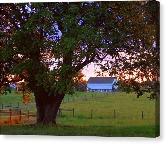 Sunset With Tree Canvas Print