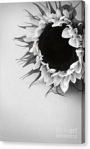 Sunshine 2 Canvas Print