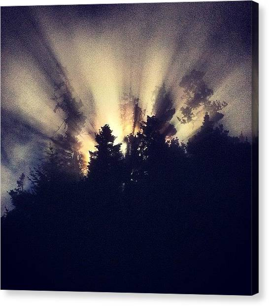 Foggy Forests Canvas Print - #sunshine Beautifully Bursting Through by Dylan Ferris