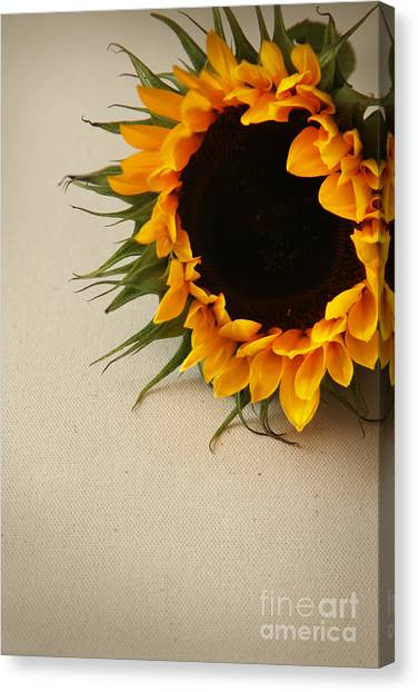 Sunshine Canvas Print