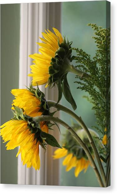 Sunshine On My Face Canvas Print by Paula Rountree Bischoff