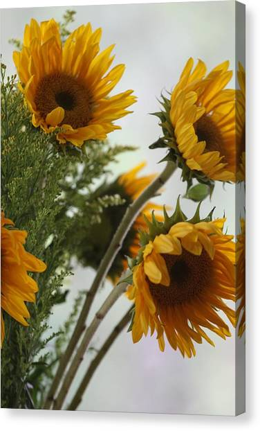Sunshine Canvas Print by Paula Rountree Bischoff