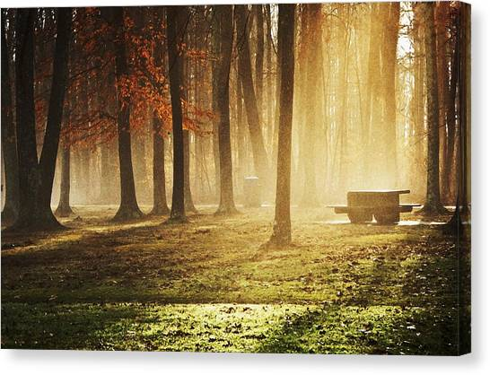 Sunshine Through The Woods Canvas Print