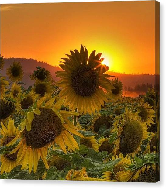 Sunset Canvas Print - Sunst And Sunfloers  #sunset by Mark Kiver