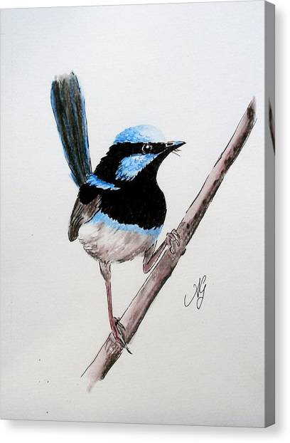 Superb Fairy Wren Canvas Print