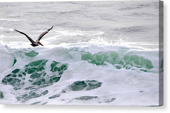 Surf N Pelican Canvas Print
