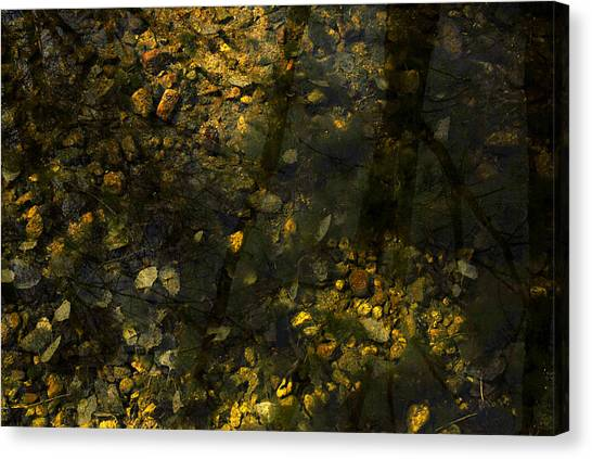 Surface Tension Canvas Print