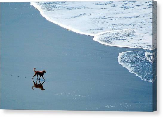 Surfer Dog Canvas Print
