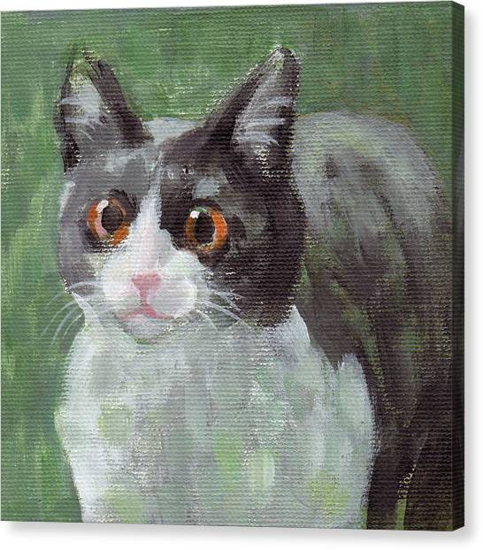 Surprised Cat Canvas Print
