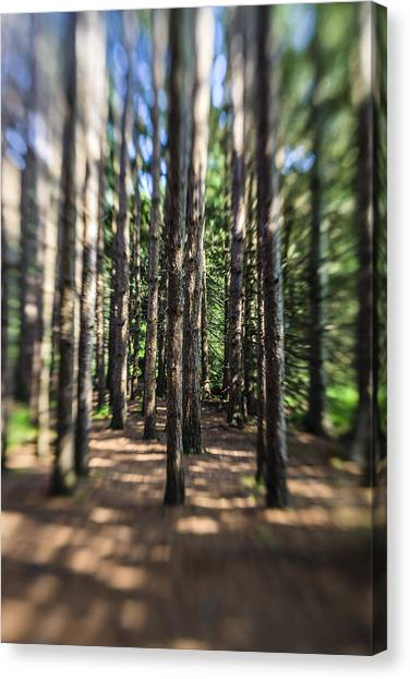 Surreal Forest Canvas Print