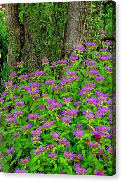 Surrounded Canvas Print
