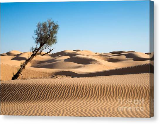 Sahara Desert Canvas Print - Surviving by Delphimages Photo Creations
