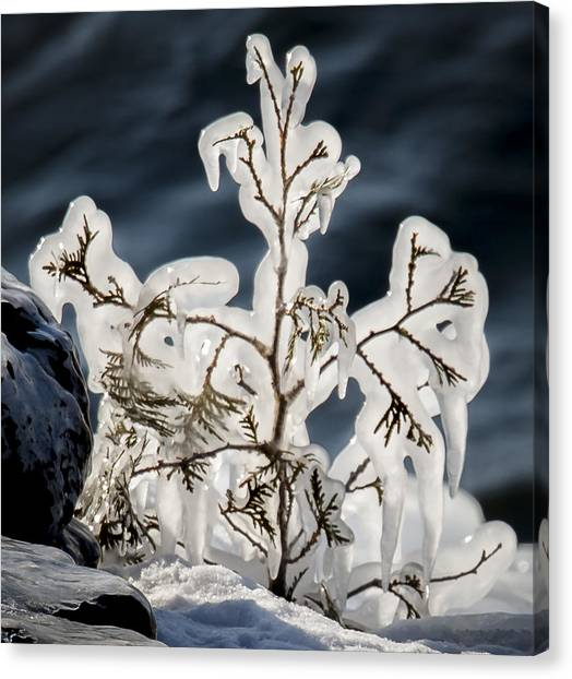Suspended In Ice Canvas Print
