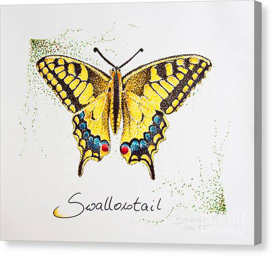 Swallowtail - Butterfly Canvas Print