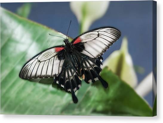 Canvas Print featuring the digital art Swallowtail Butterfly by Mae Wertz