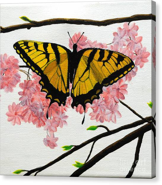 Swallowtail In Cherry Blossoms Canvas Print