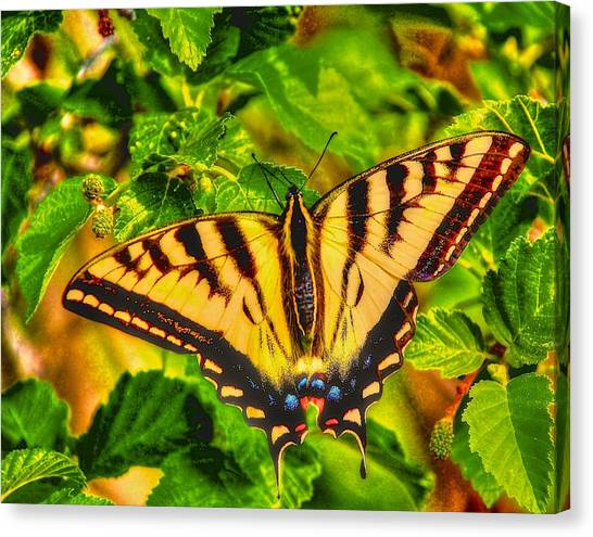 Swallowtail Canvas Print by Larry Bodinson