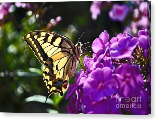 Swallowtail On A Flower Canvas Print