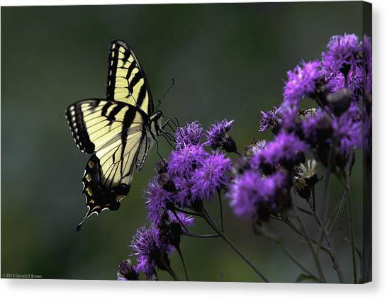 Swallowtail On Purple Canvas Print