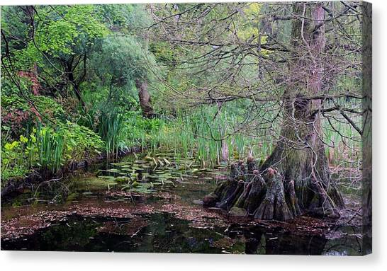 Swamp Garden Canvas Print