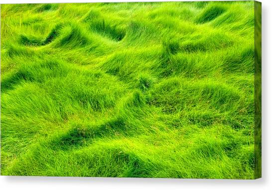Swamp Grass Abstract Canvas Print