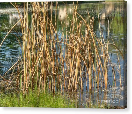 Swamp Grass Canvas Print by Deborah Smolinske