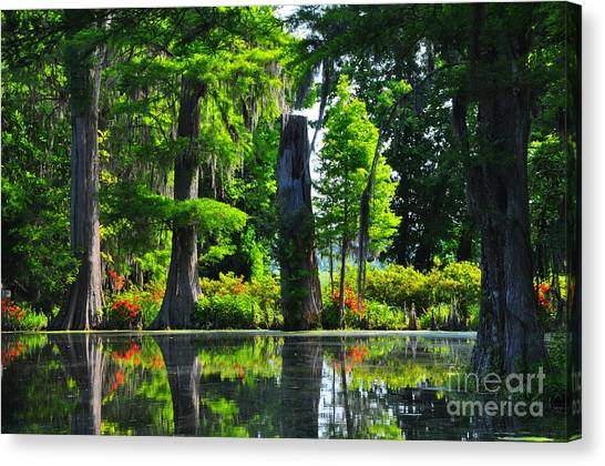 Swamp In Bloom Canvas Print