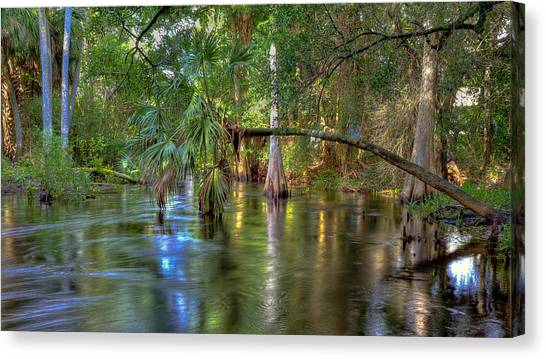 Swamp Life Canvas Print