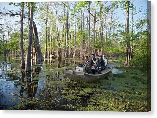 Atchafalaya Basin Canvas Print - Swamp Tour by Jim West
