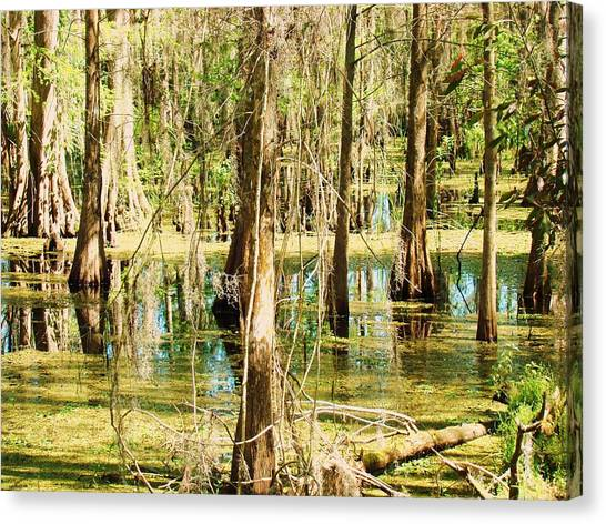 Swamp Wading 1 Canvas Print by Van Ness