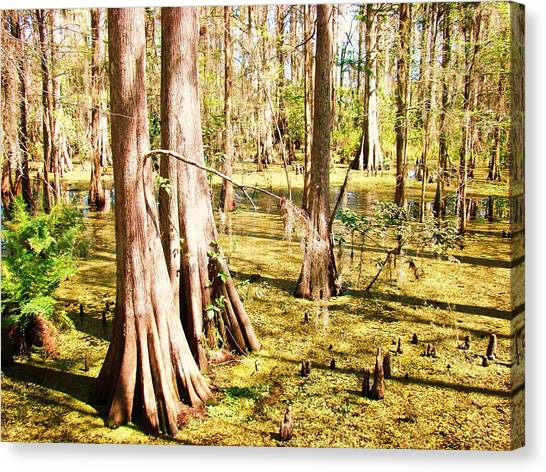 Swamp Wading 3 Canvas Print by Van Ness