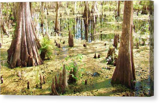 Swamp Wading 6 Canvas Print by Van Ness