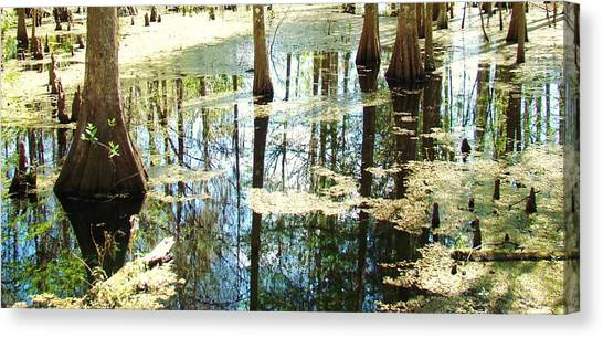 Swamp Wading 5 Canvas Print by Van Ness