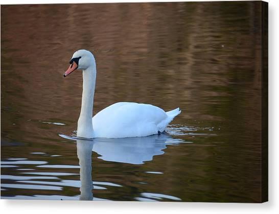 Swan 6 Canvas Print
