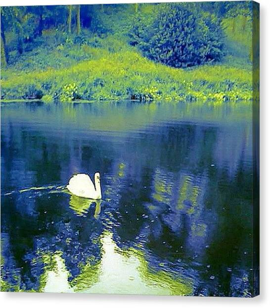 Floss Canvas Print - #swan #animals #lake #water #green by Candy Floss Happy