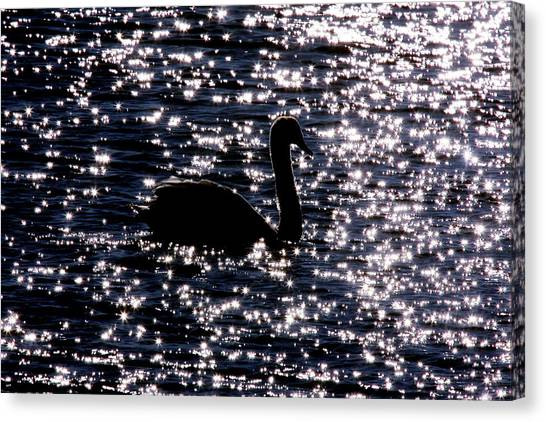 Swan Bay Canvas Print