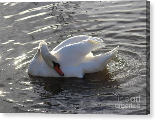 Swan By The Lake # 2 Canvas Print by Jeanette Rode Dybdahl