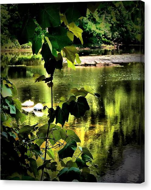 Swan Dive Canvas Print