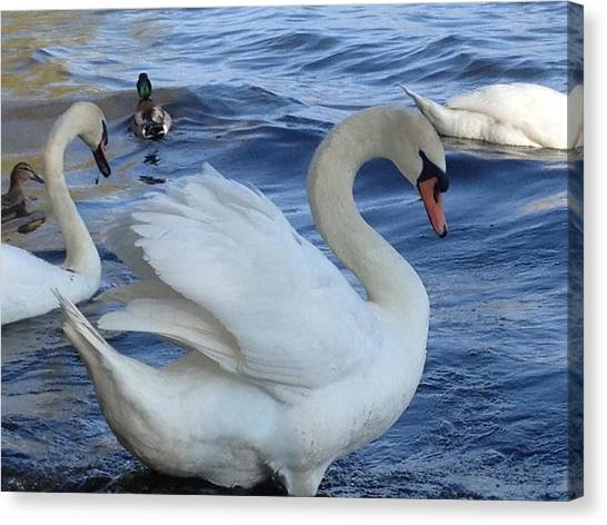Swan Grace Canvas Print