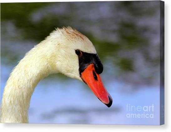 Swan Head Shot Canvas Print