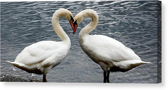 Swan Heart 2 Canvas Print