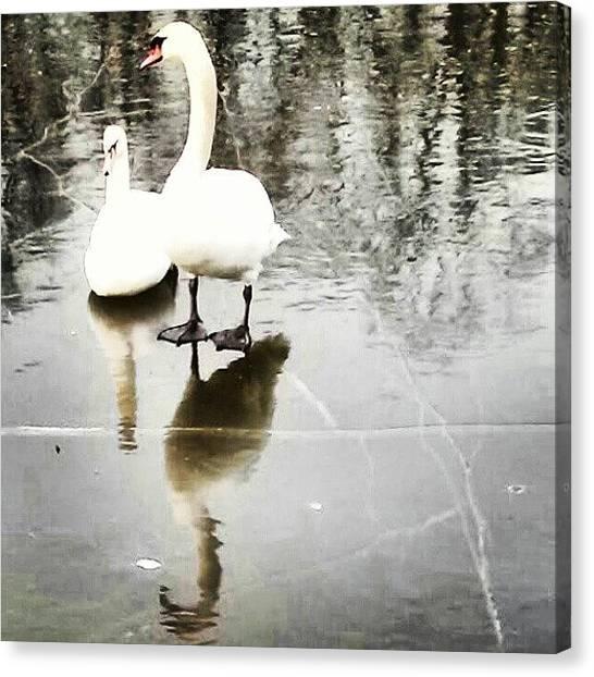 Ice Skating Canvas Print - #swan #ice #frozen #water #lake #pond by Antonio DeFeo