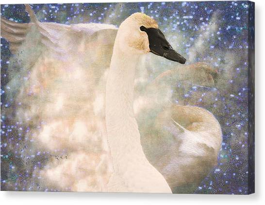Swan Journey Canvas Print